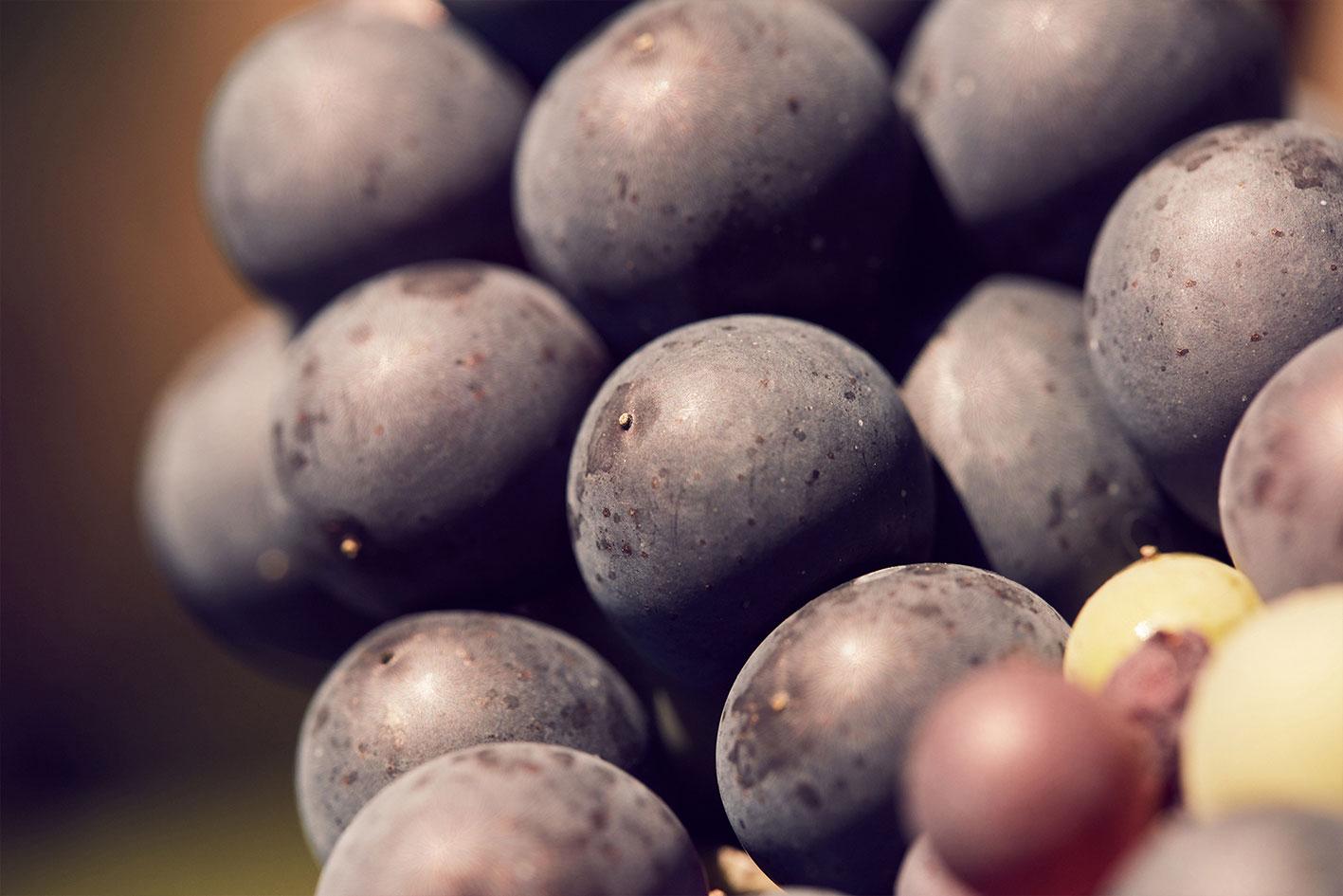 Wein vom Weingut Frauenkopf. Sein Terroir und die Menschen, die ihn kreieren.